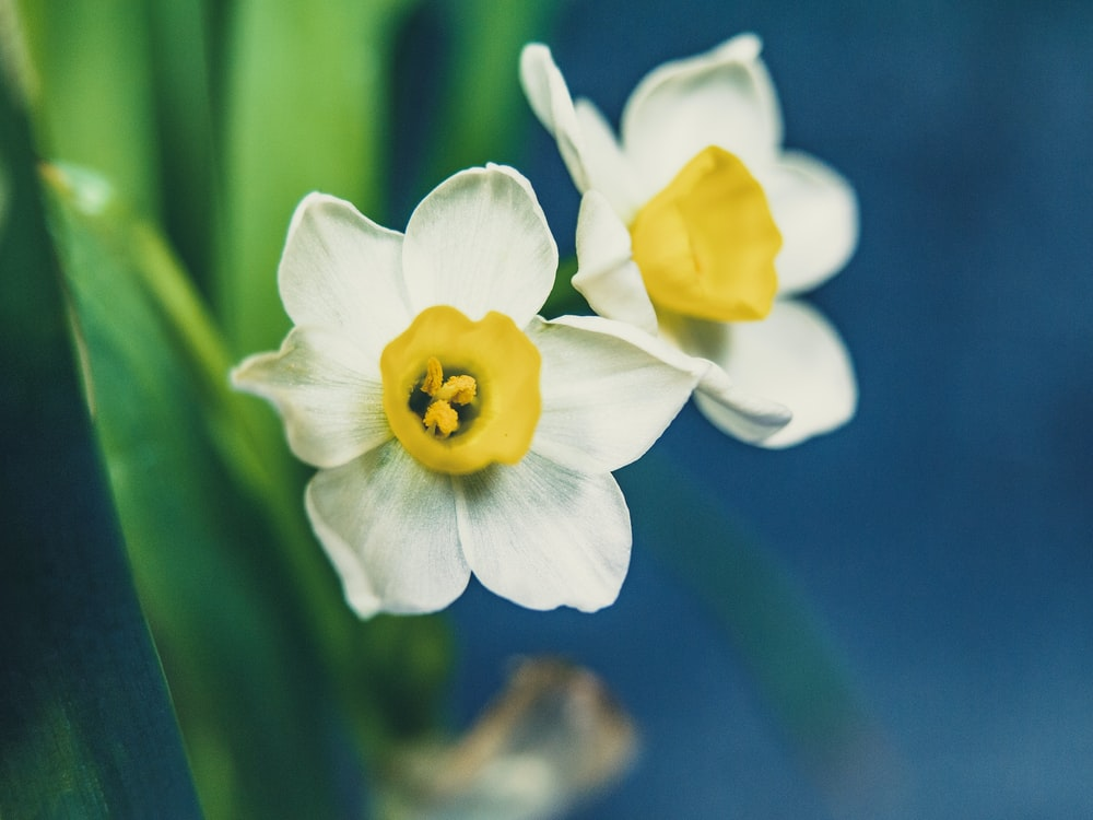 photo of yellow and white flowers