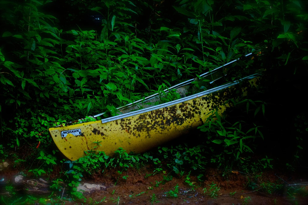 yellow canoe on green leafed plants at daytime