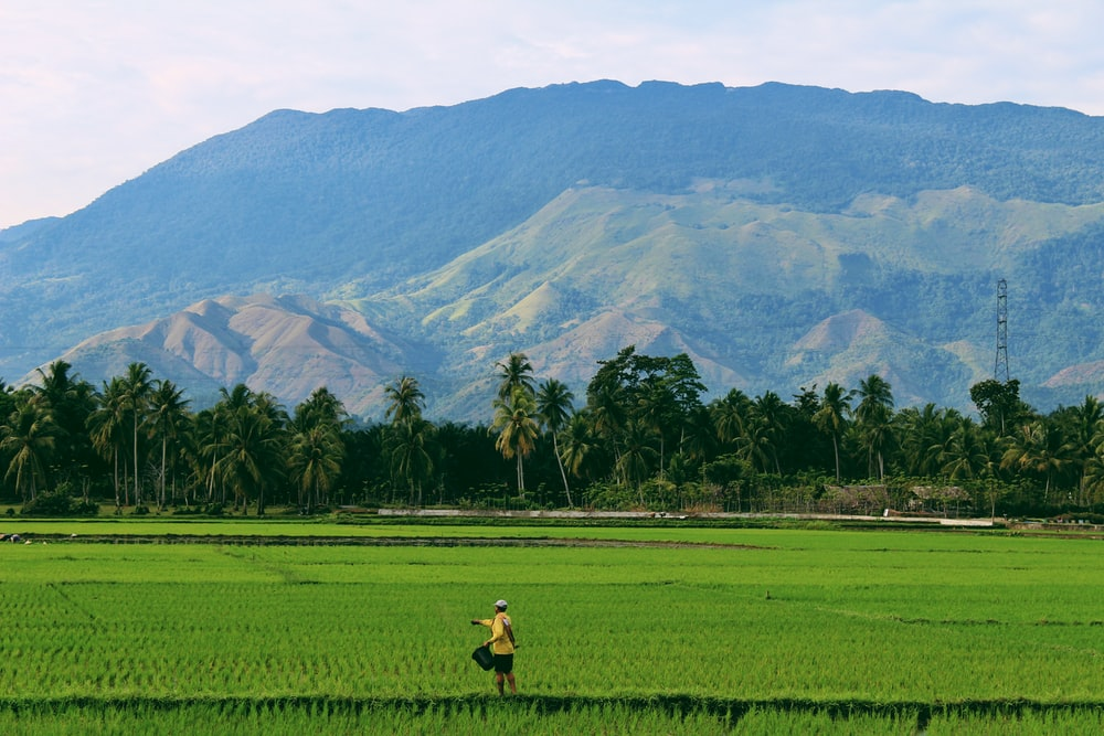 person farming on rice field