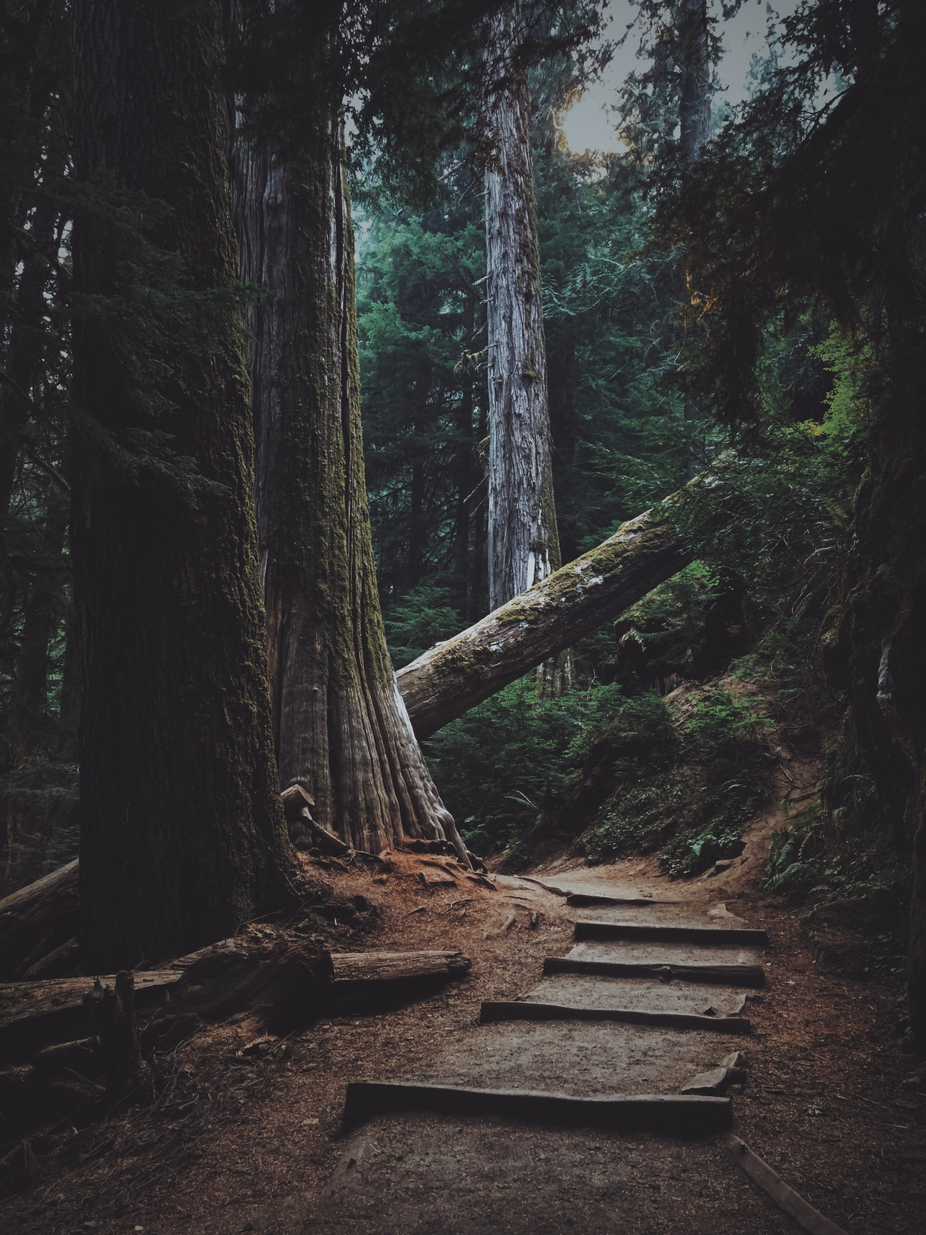 forest trees with pathway