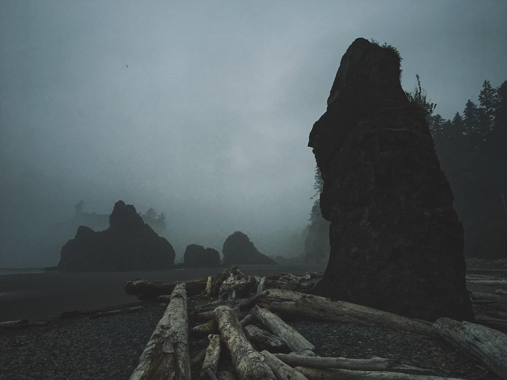 brown logs on road