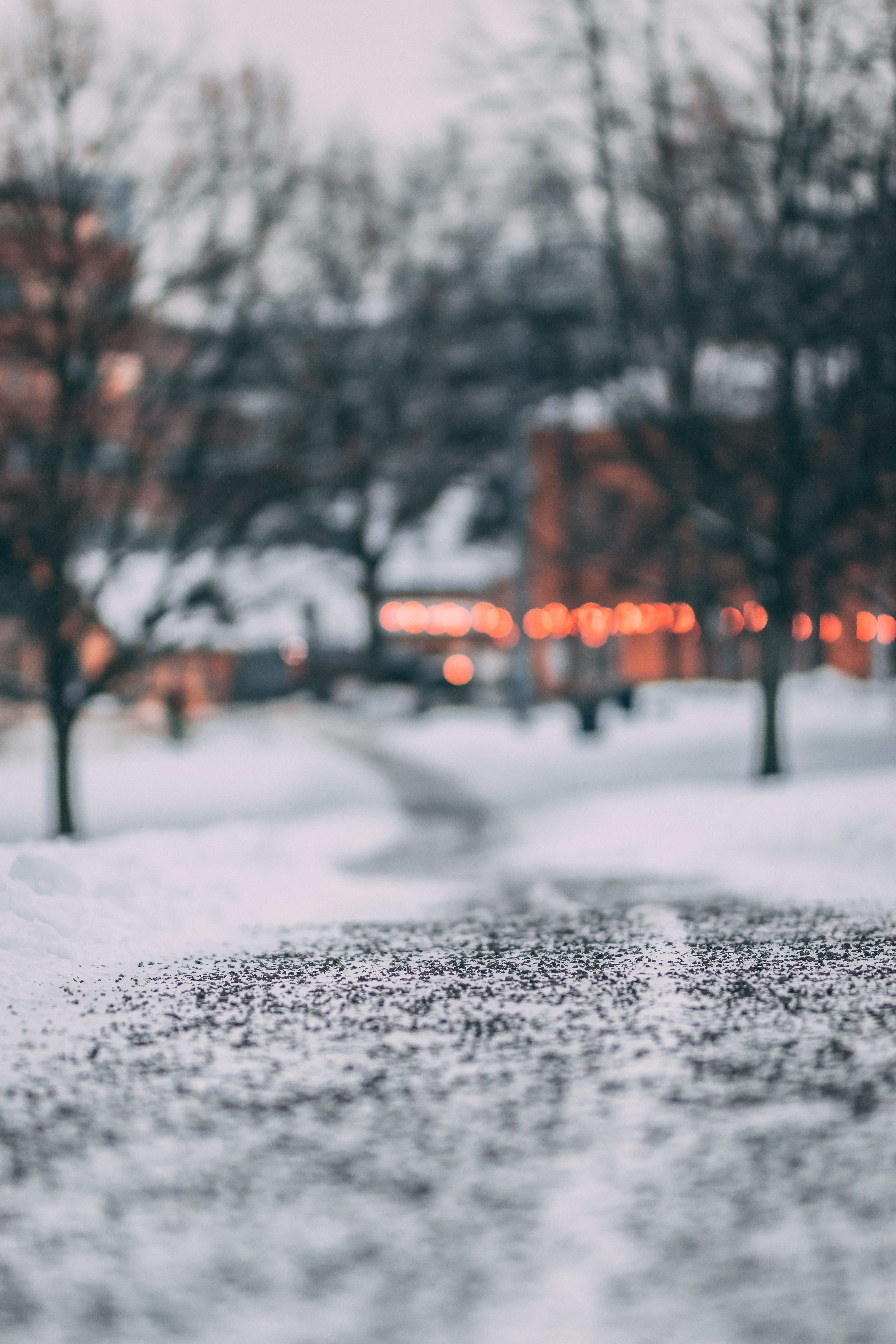 selective focus photography of snow pathway