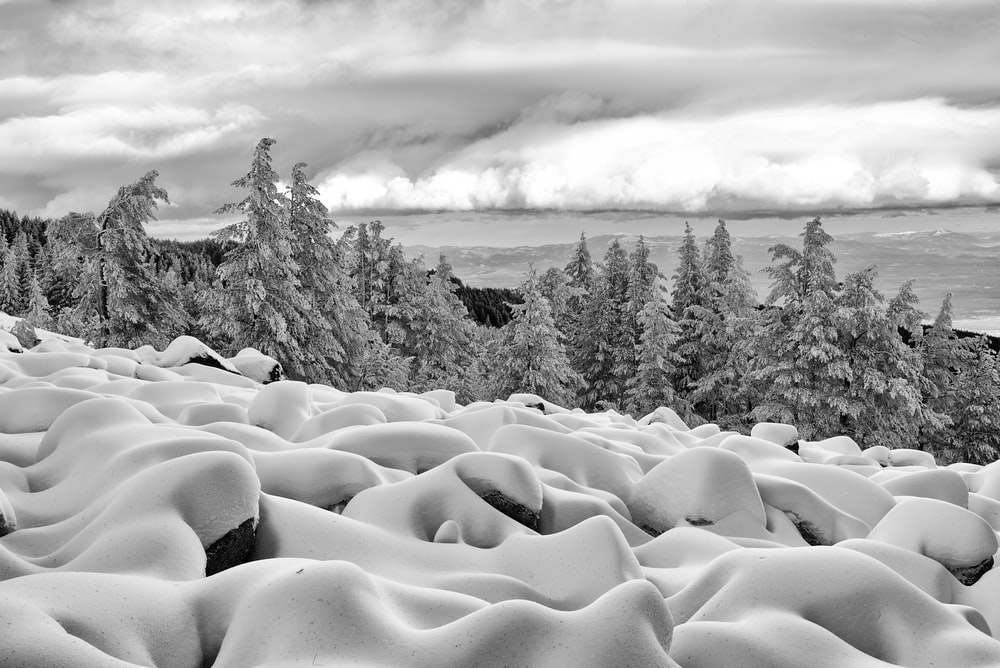 grayscale photography of trees with snow