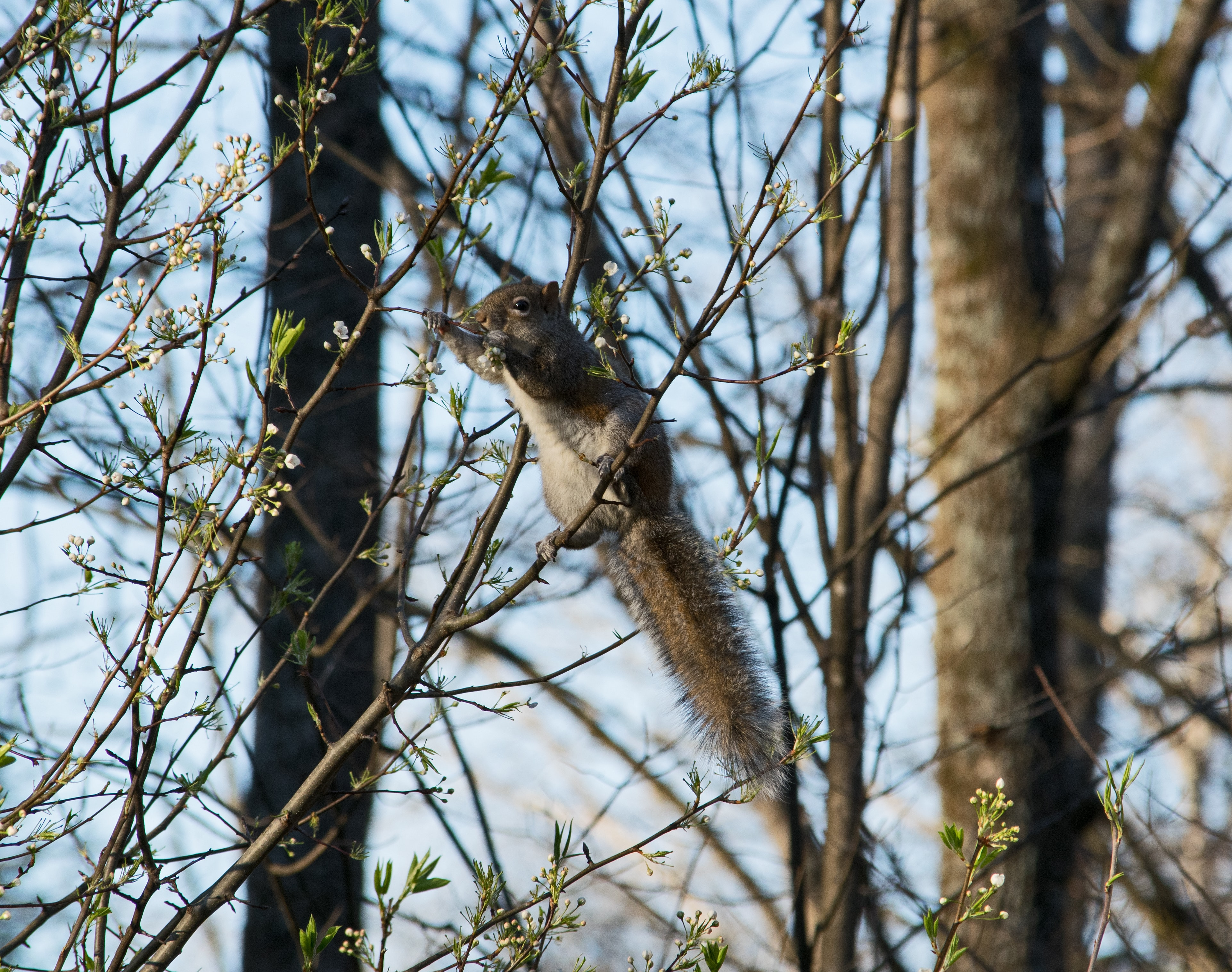 squirrel on tree branch at daytime