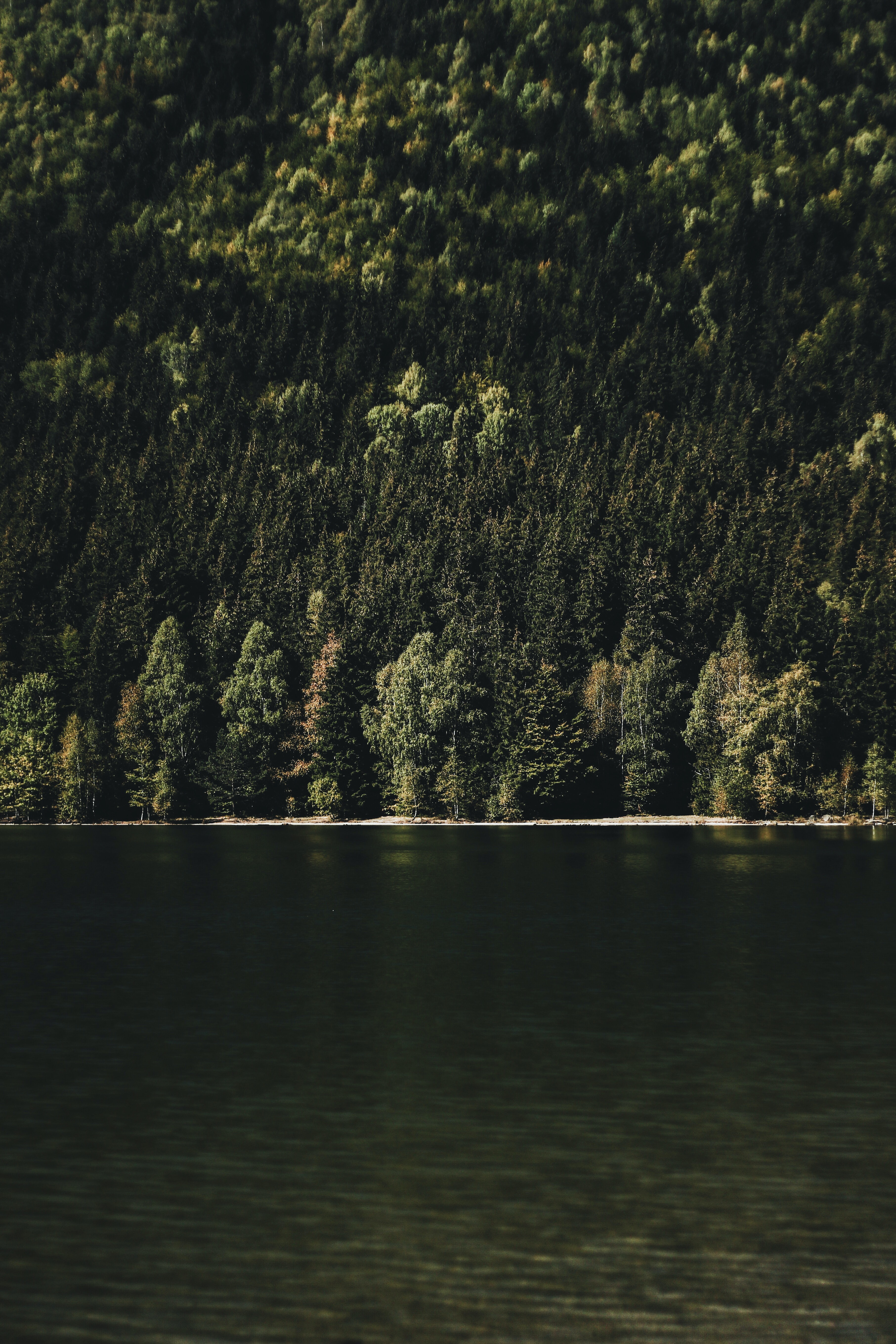 landscape photography of body of water beside green tree covered mountain
