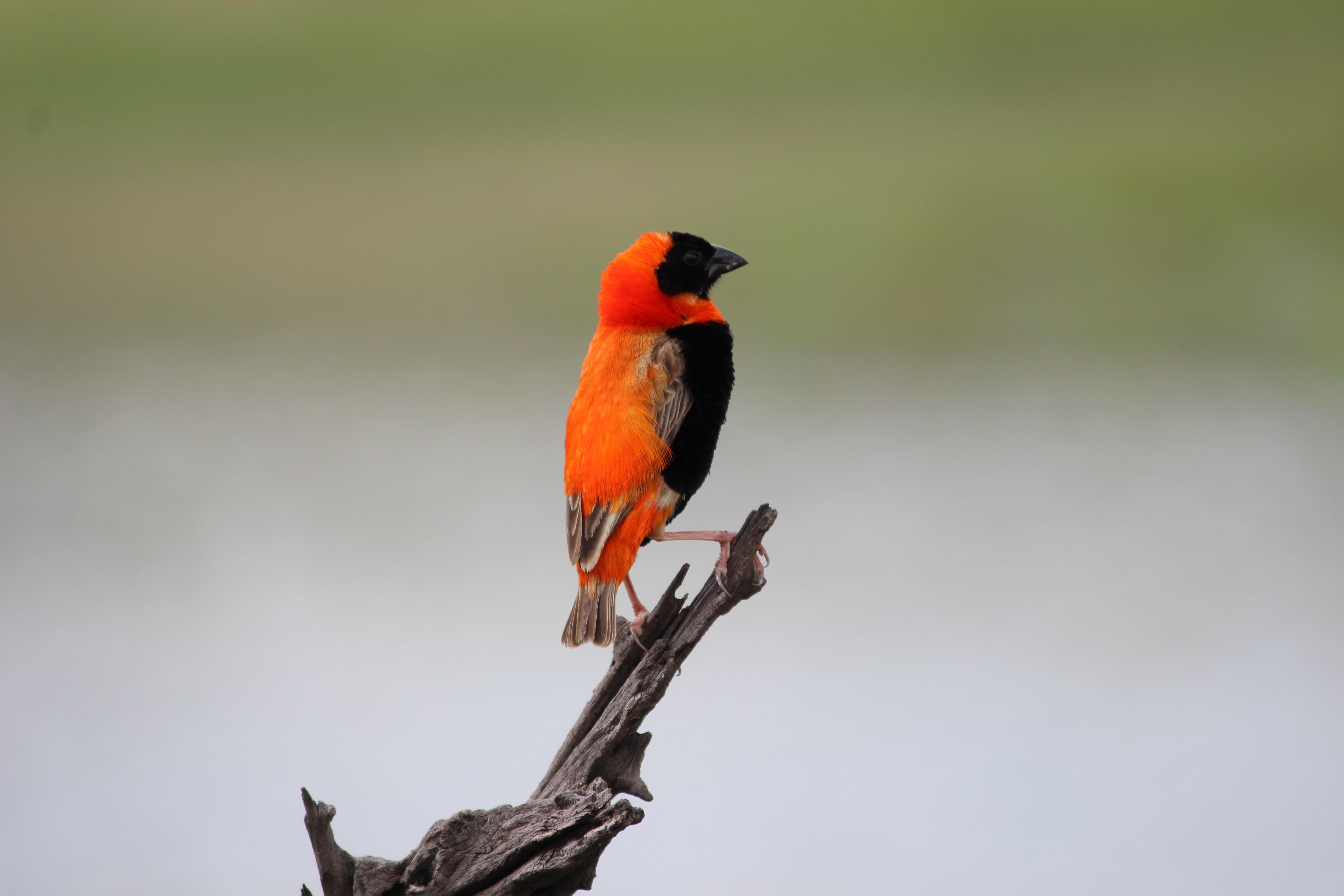 bird resting on tree brand