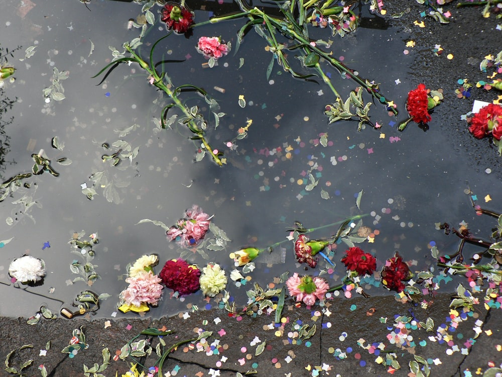 photo of assorted-color petaled flowers floating on body of water
