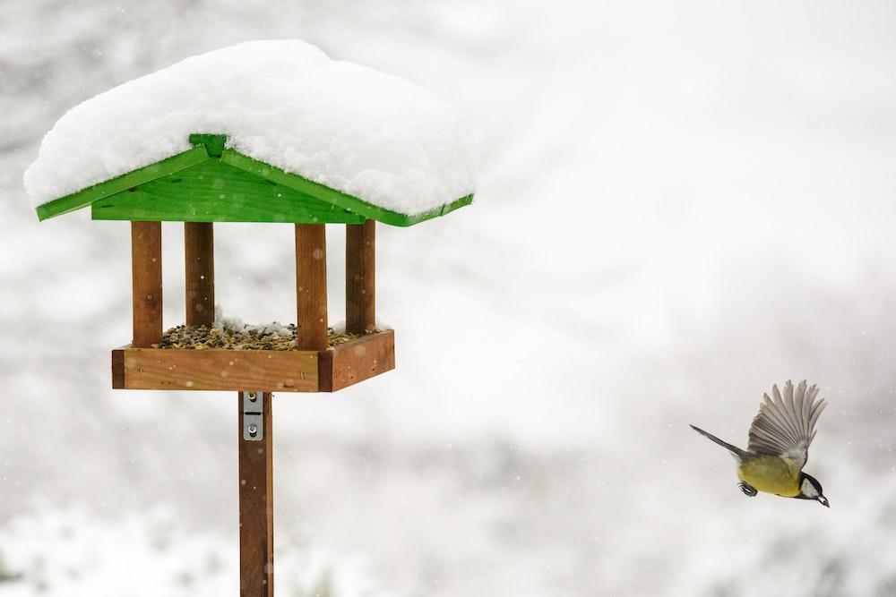 bird flying near birdhouse
