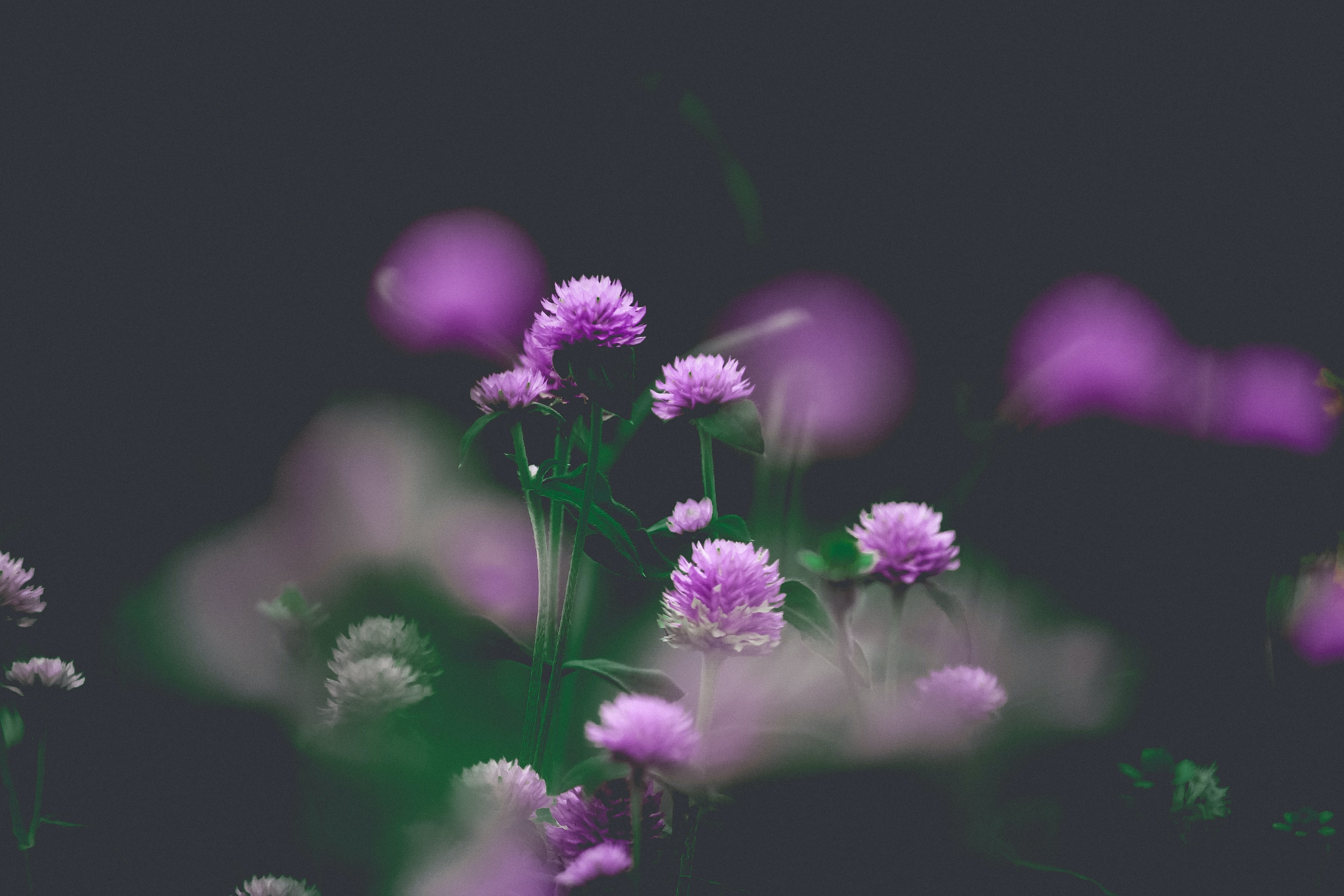 shallow focus of purple flower