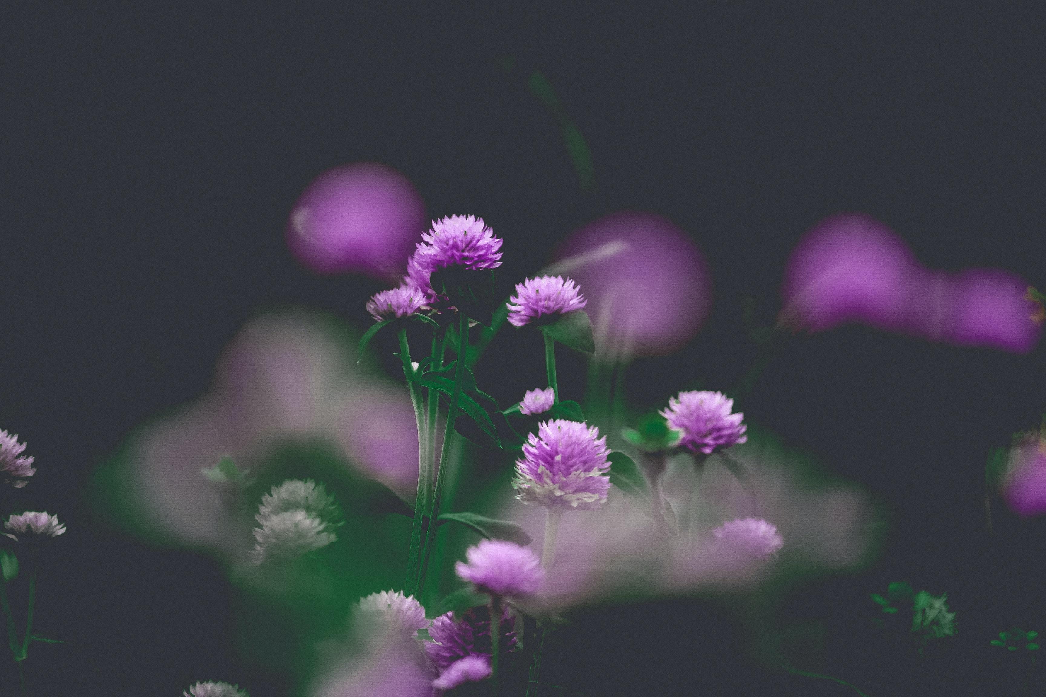shallow focus of purple flower