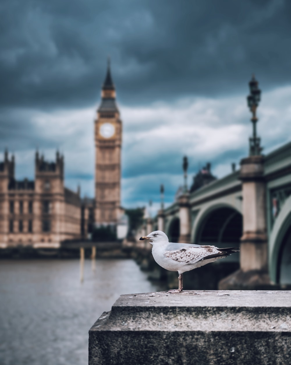 shallow focus photography of seagull and Big Ben in London