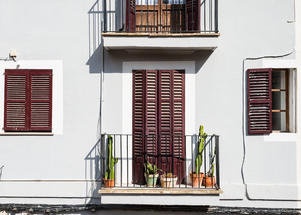 five green cactus on terrace