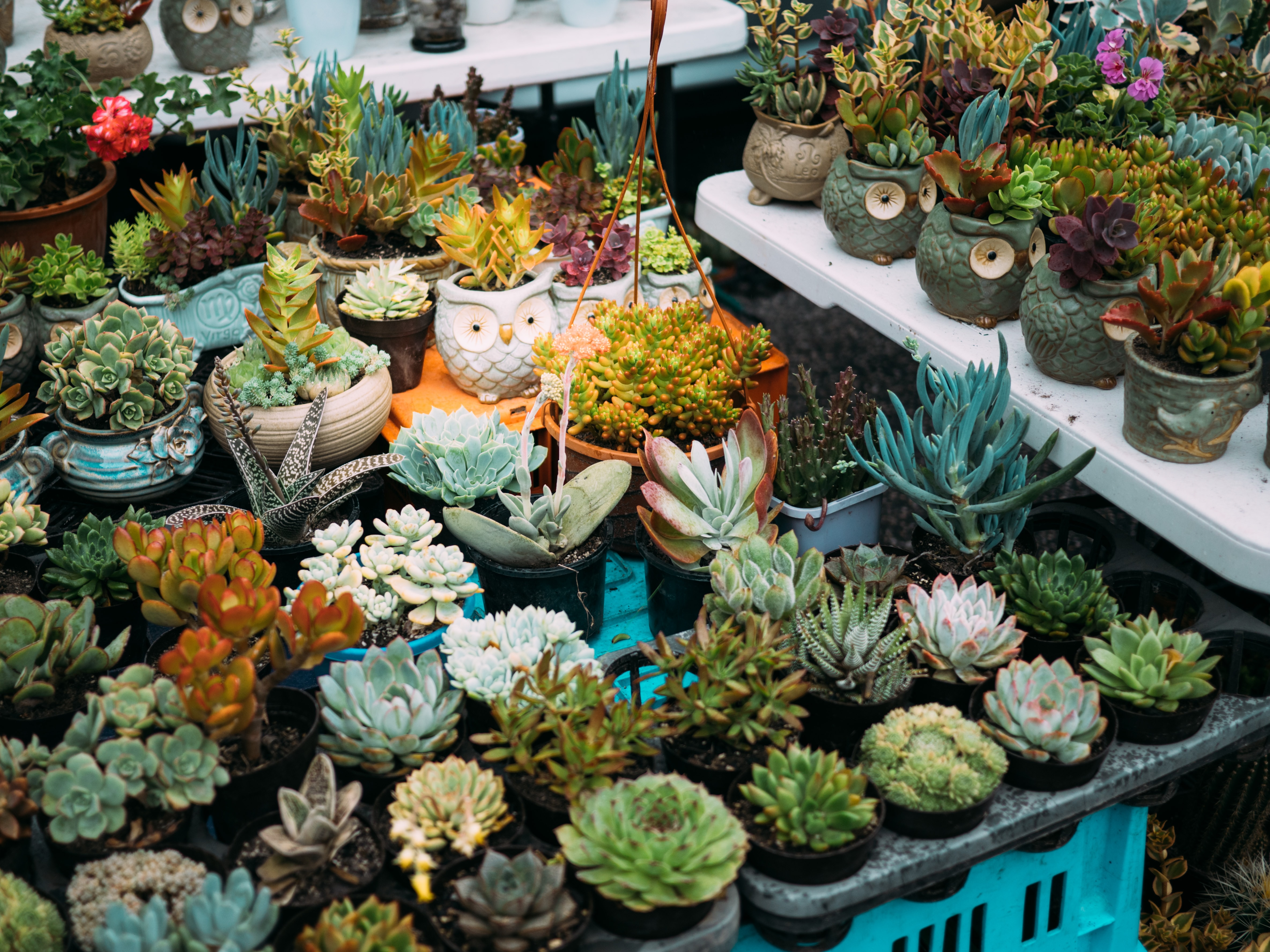 assorted potted succulents