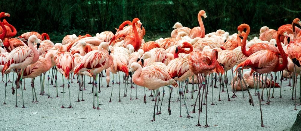 photo of group of flamingos