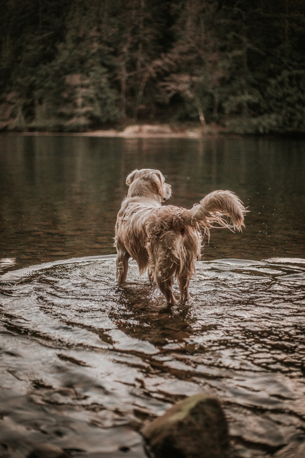 dog standing on body of water