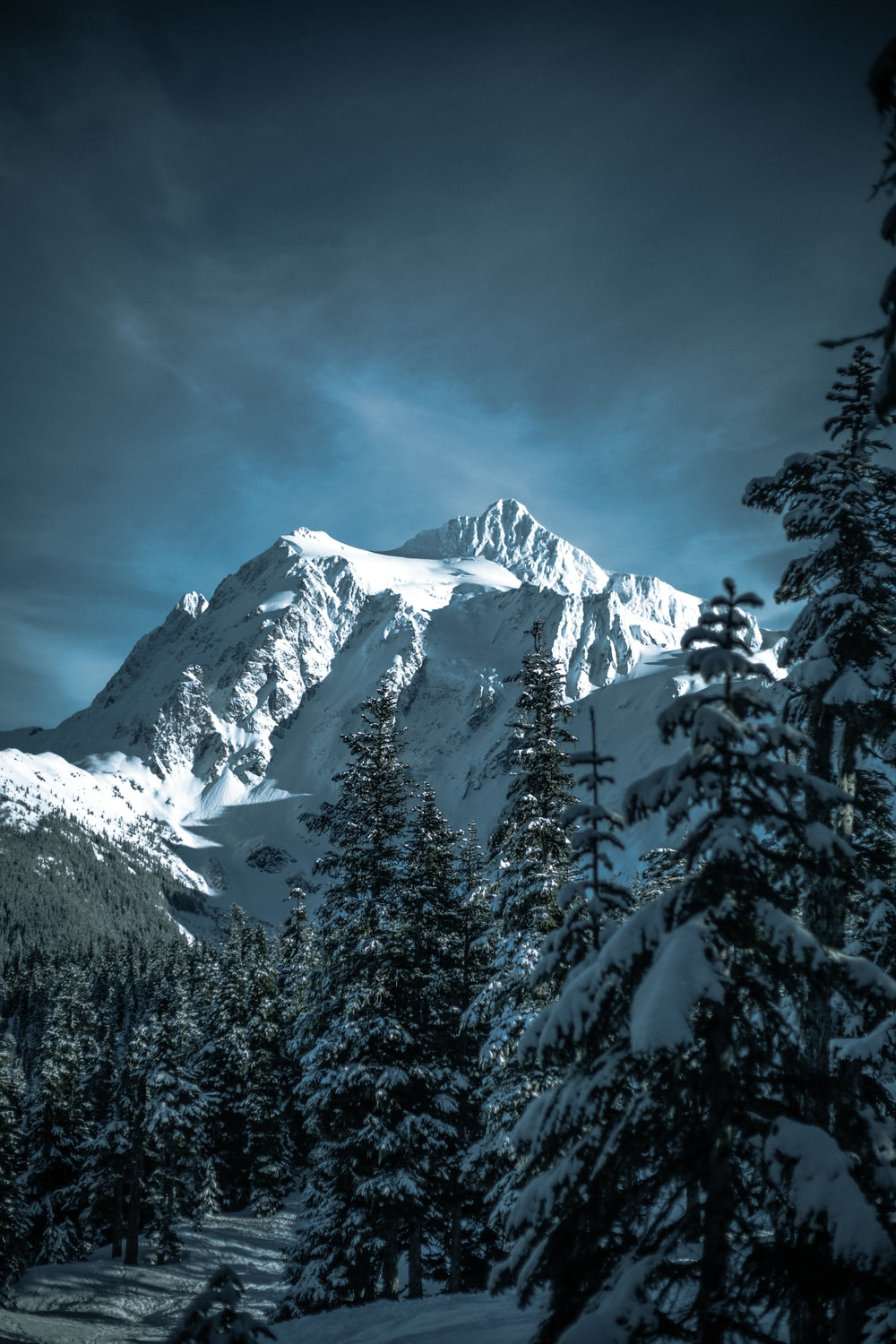 snow-covered pine trees and mountain