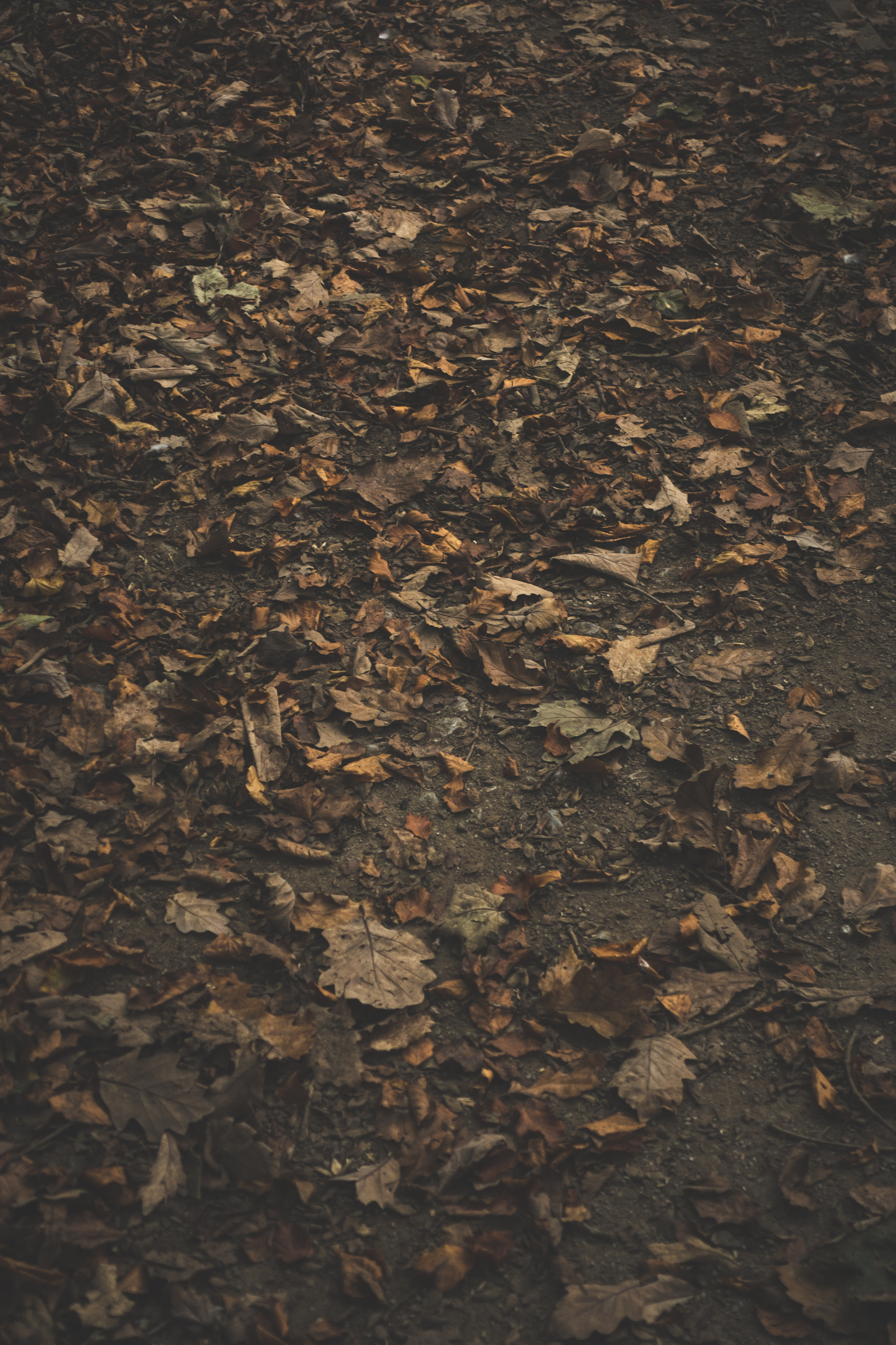 closeup photo of brown leaves on ground