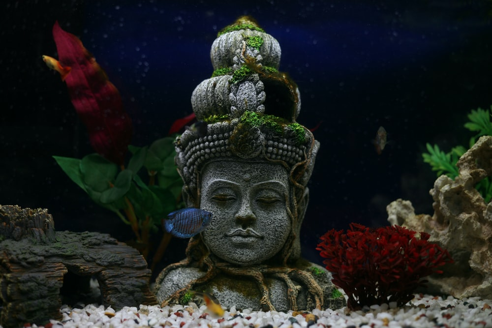 blue pet fish in front of Hindu deity bust