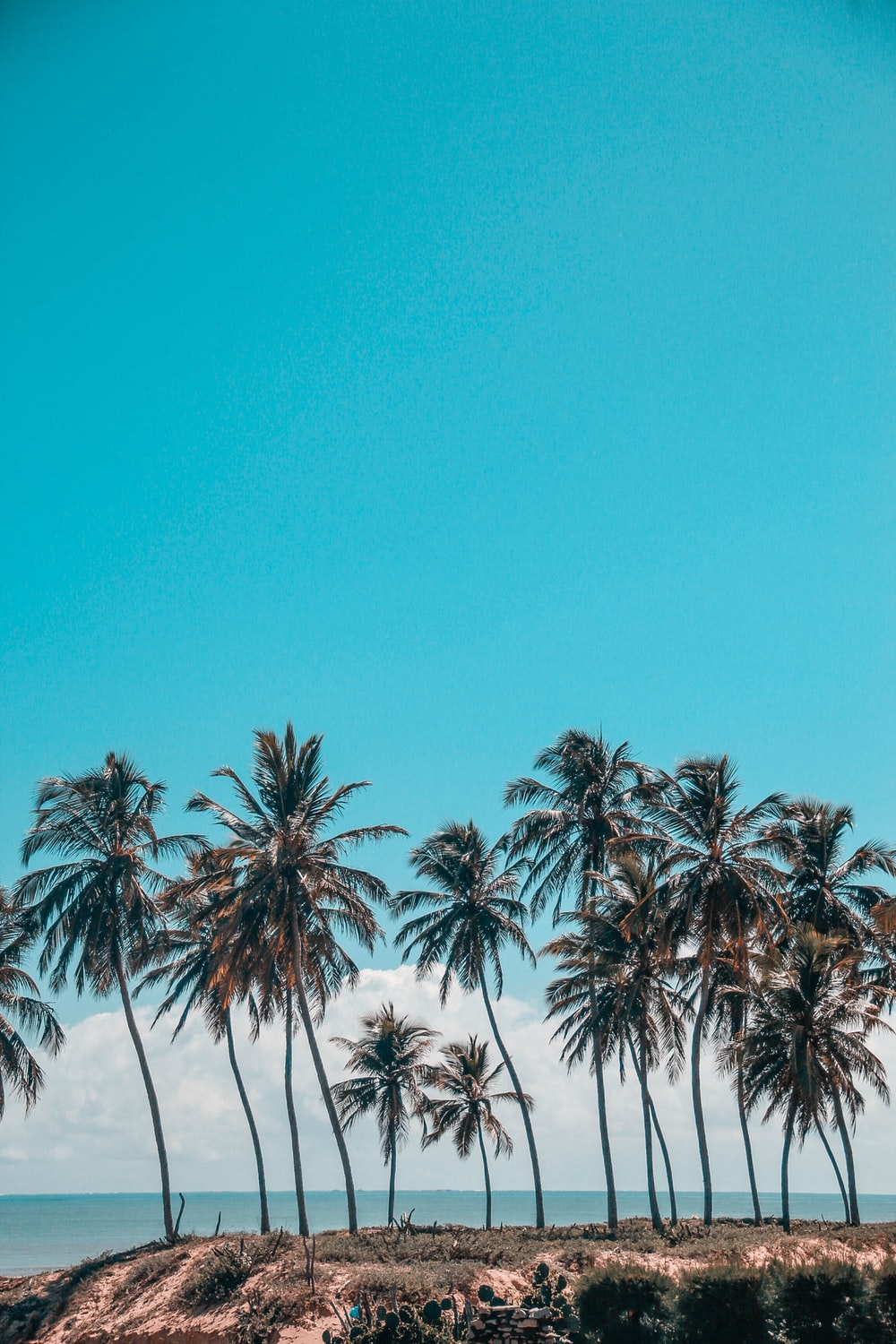 landscape photography of palm trees near the sea