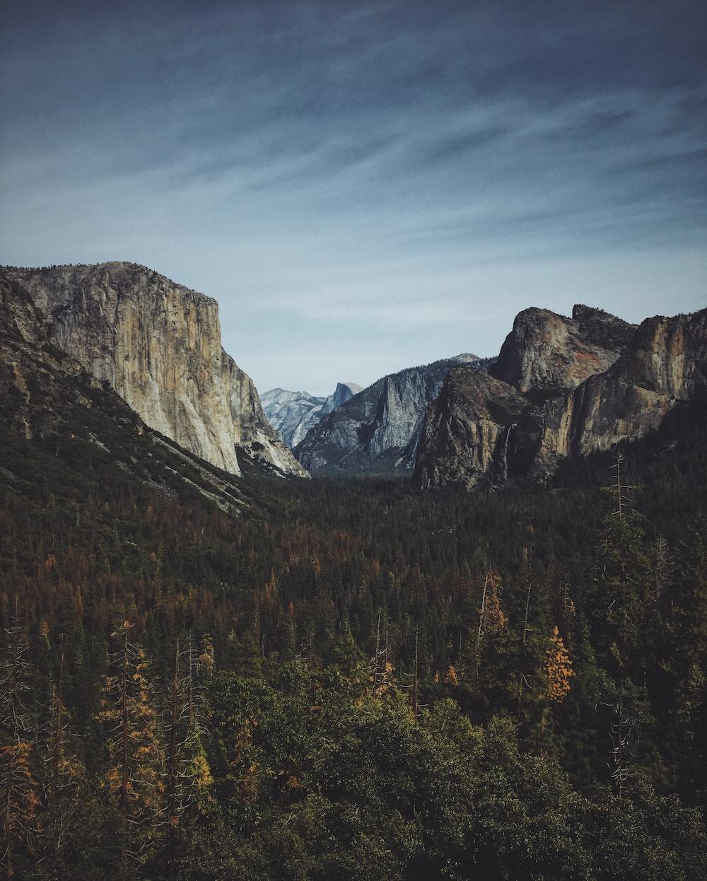 fir trees overlooking rocky mountains under blue sky
