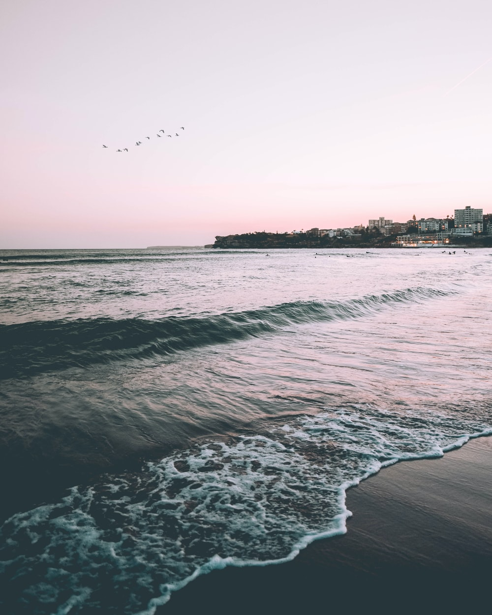 birds flying over seashore