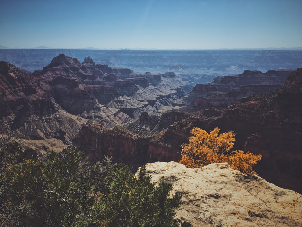 landscape photo of cliff beside trees