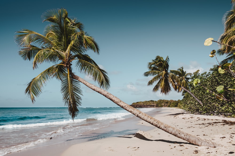 green leaning coconut tree near seashore at daytime