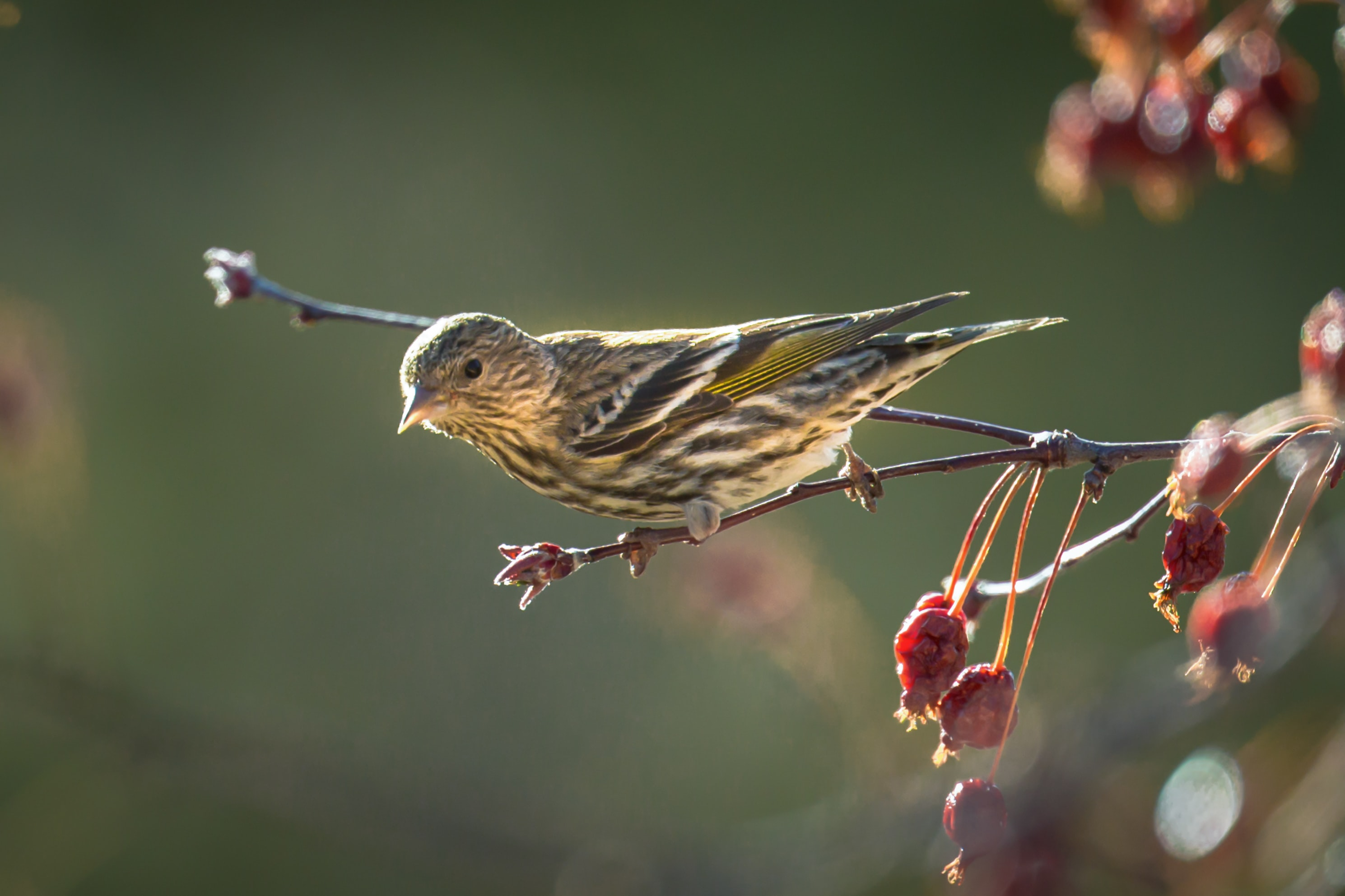 shallow focus photography of brown bird resting on branch