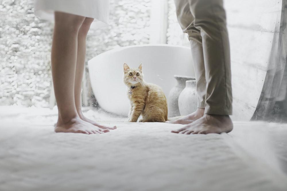 orange tabby cat sitting between standing man and woman inside room