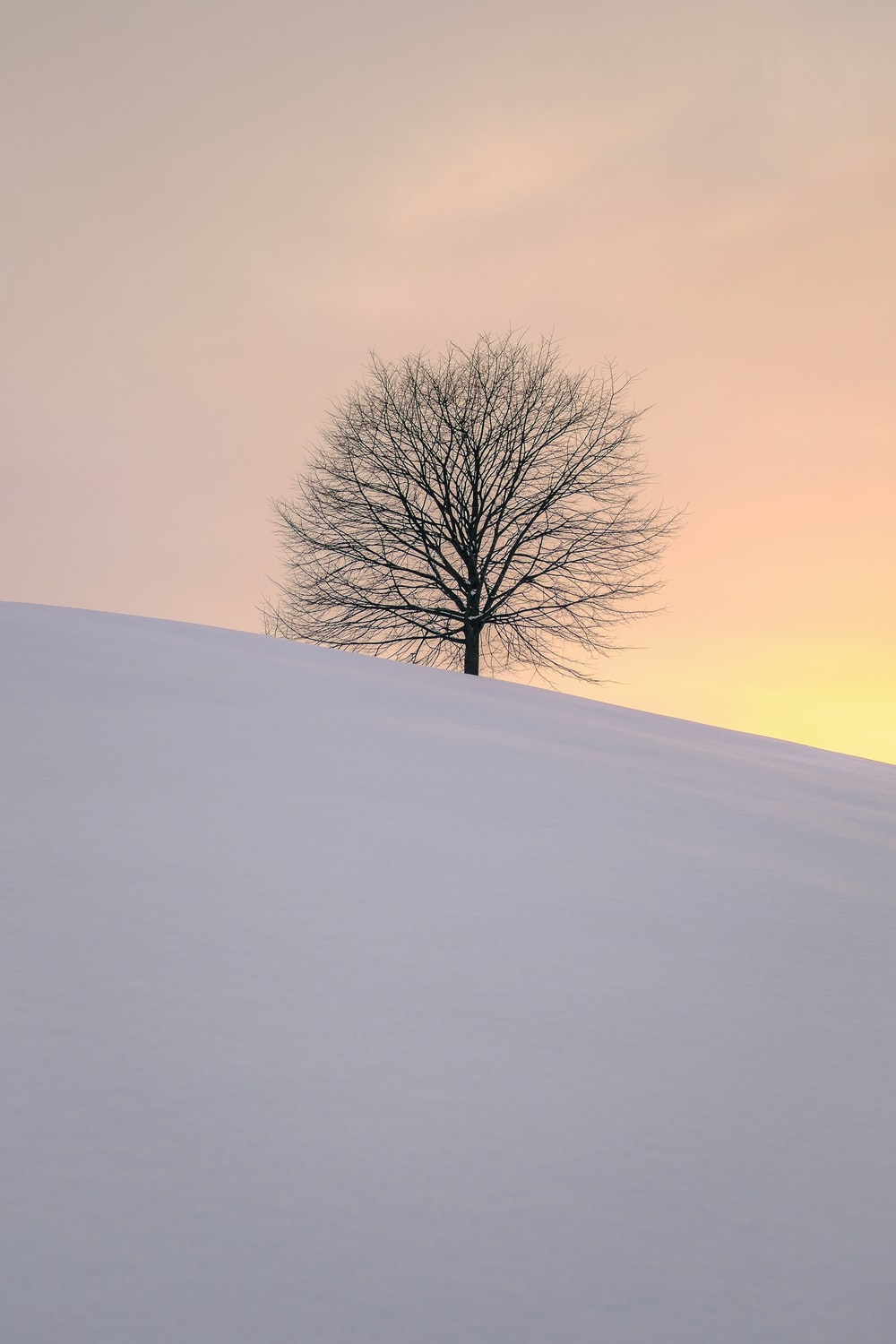 leafless tree on the hill