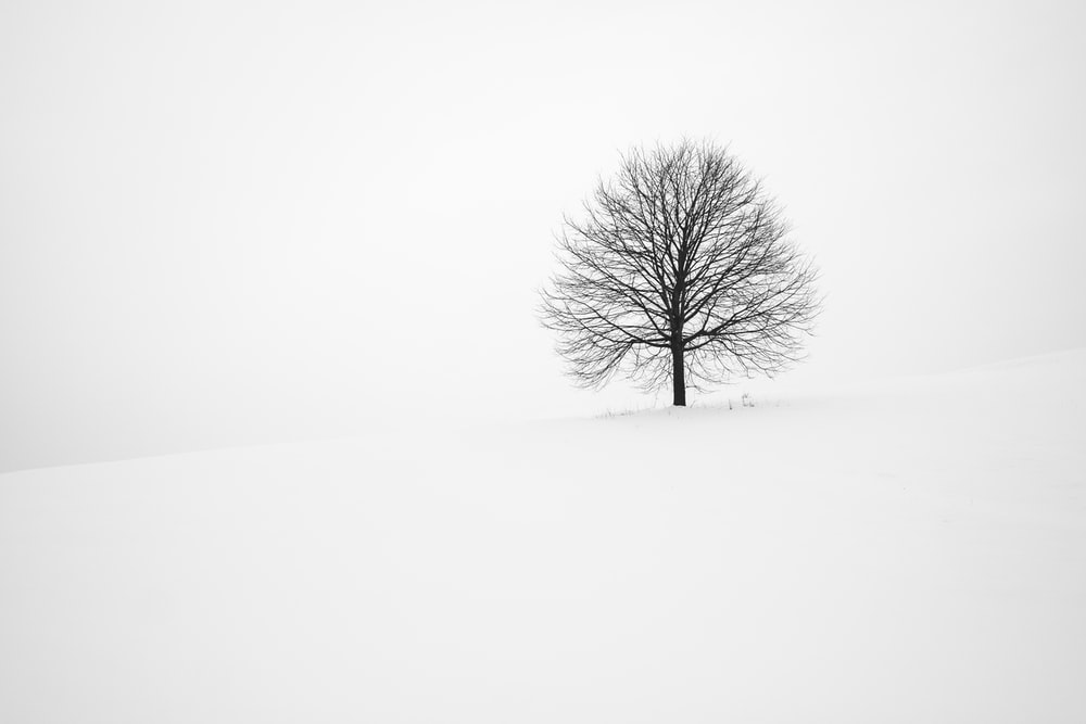 withered tree surrounded with snow during daytime