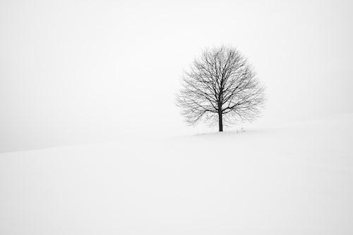 tree lopping northern beaches sydney