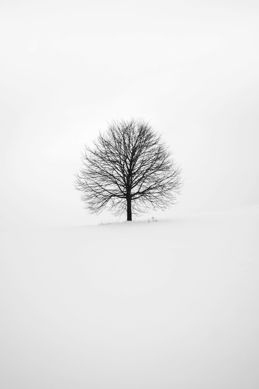 Black & White World II