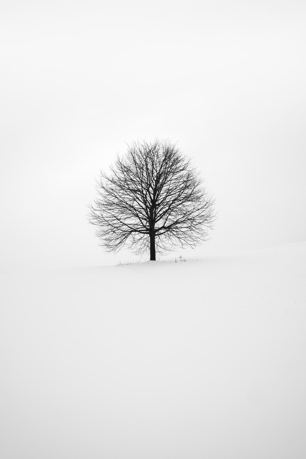 photography of tree