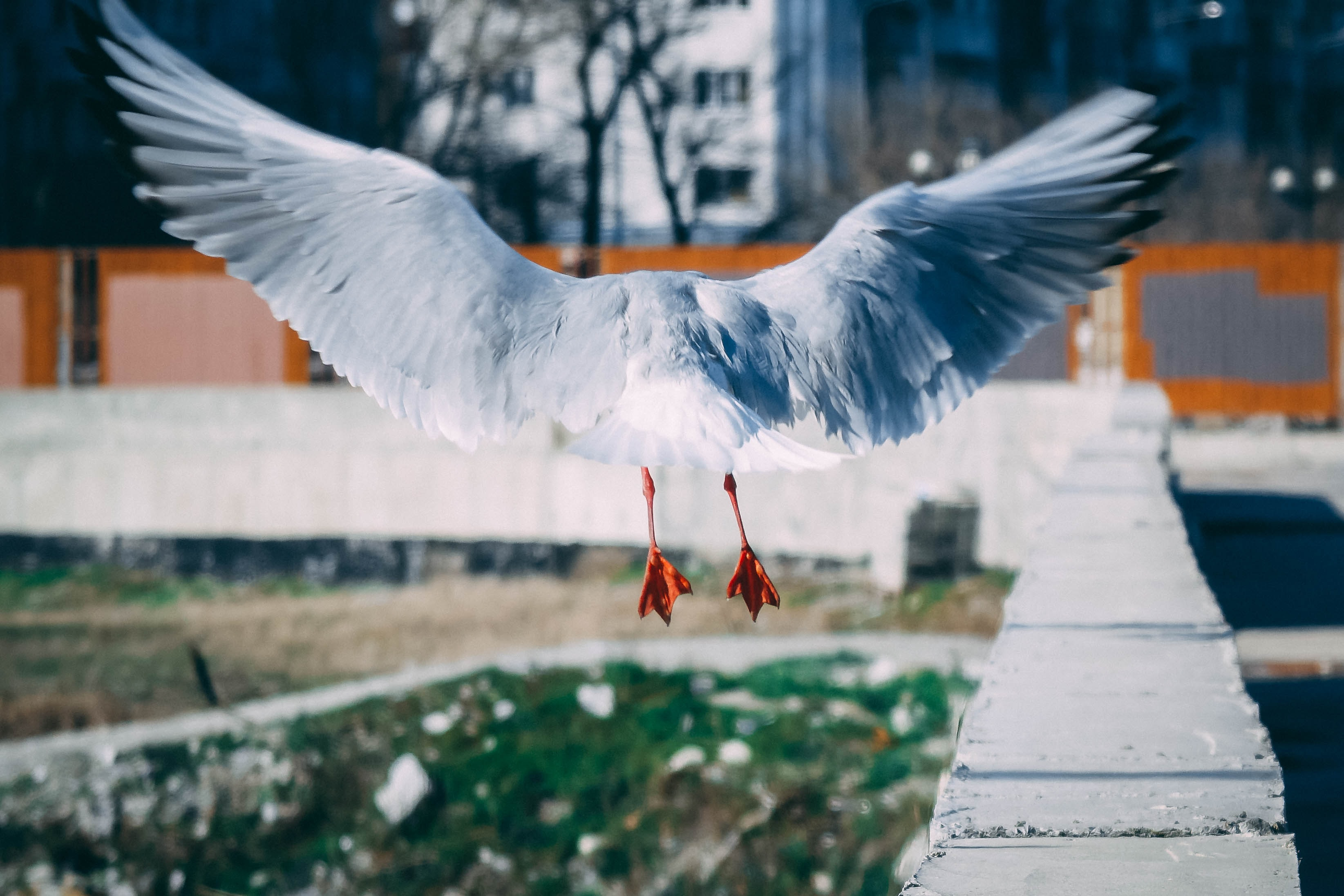 white bird flying near concrete wall