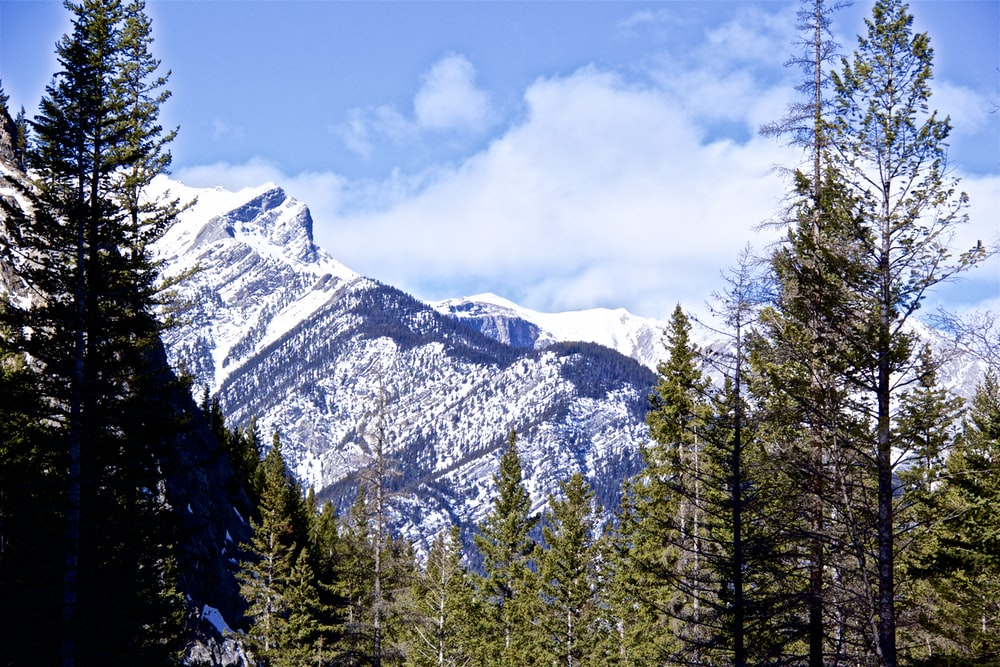 snowy mountain and trees