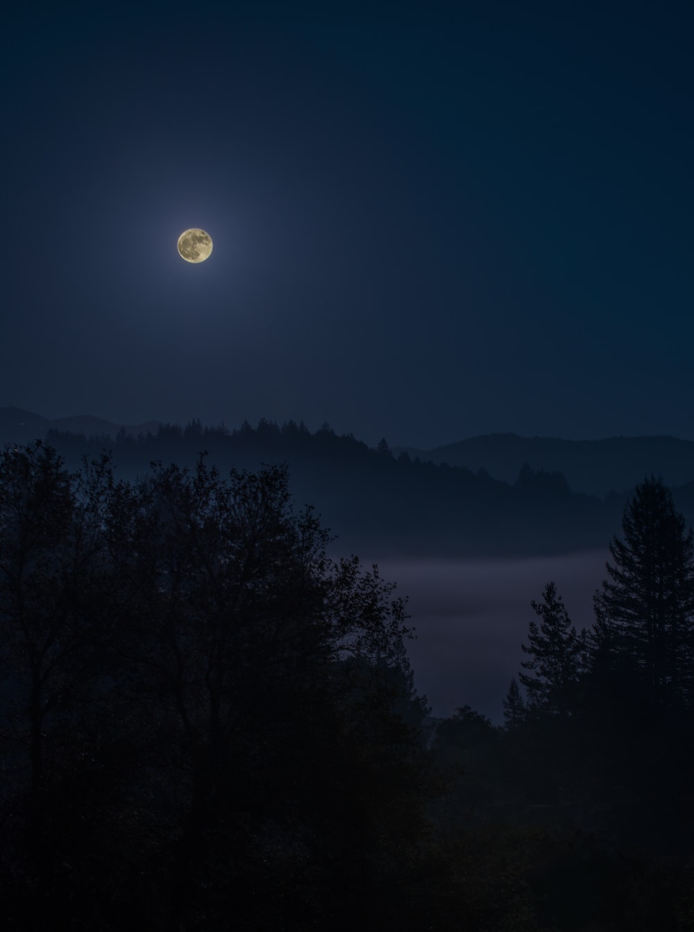 Photo of forest under full moon