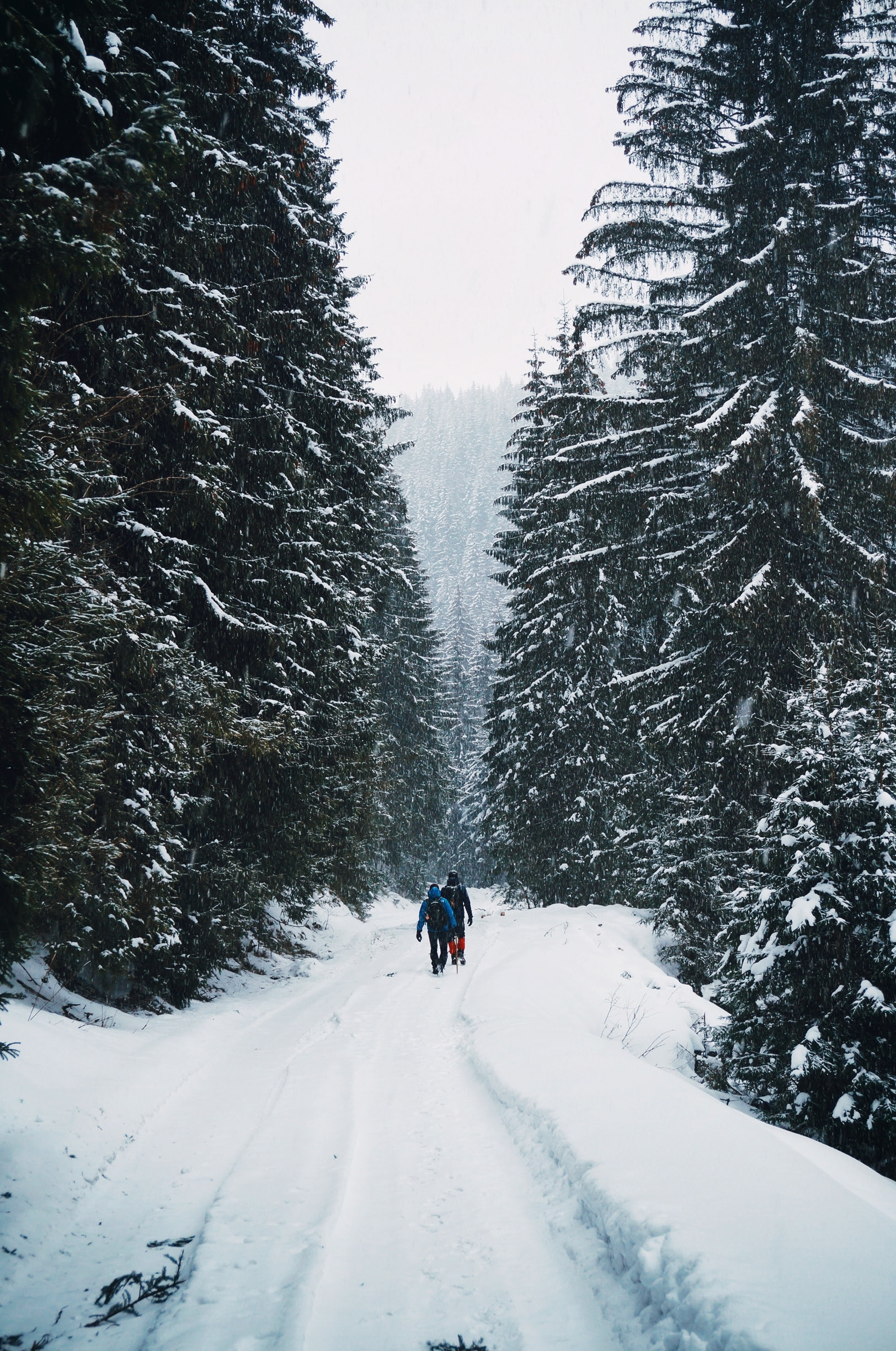 two person walking on snow-covered road in middle of forest