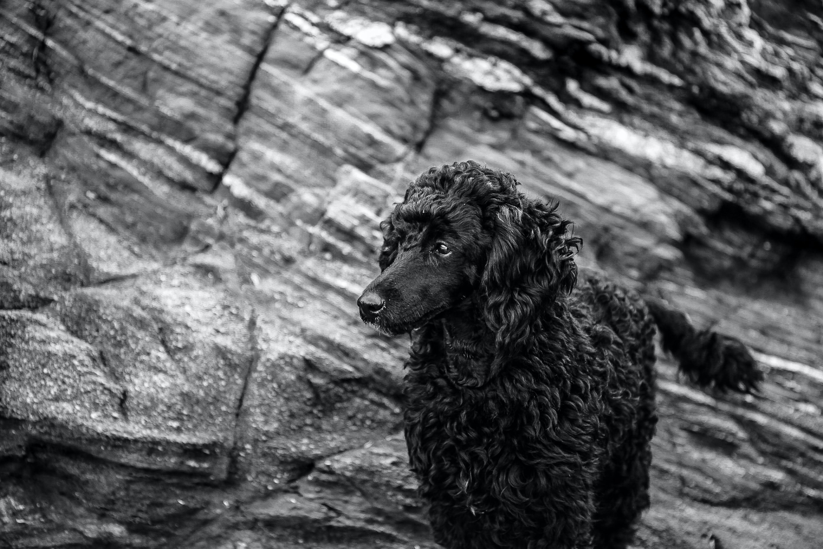 grayscale photography of dog standing on hill