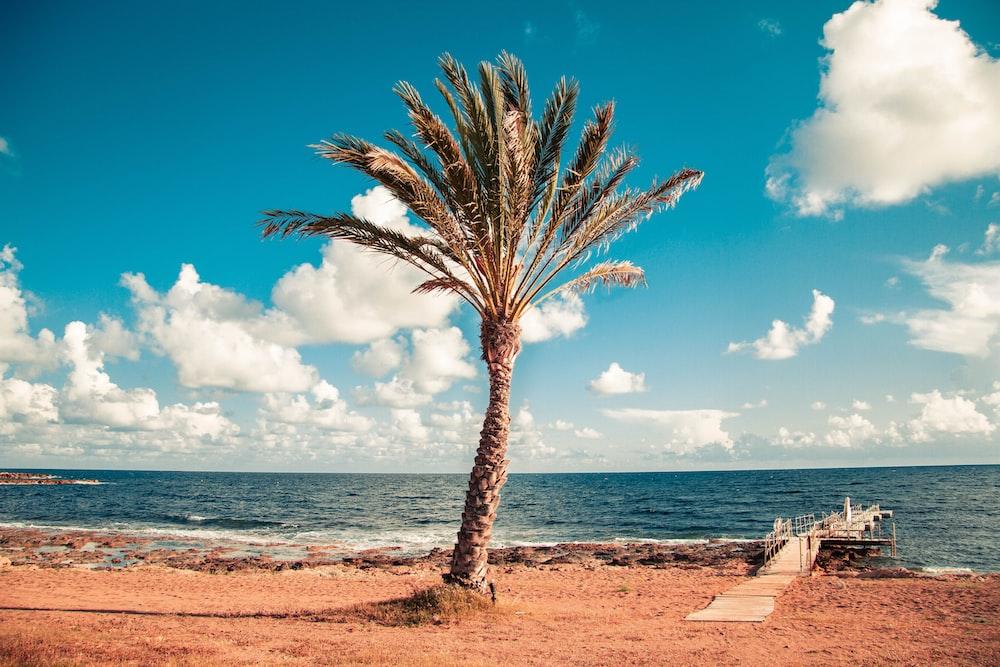 palm tree near dock and beach