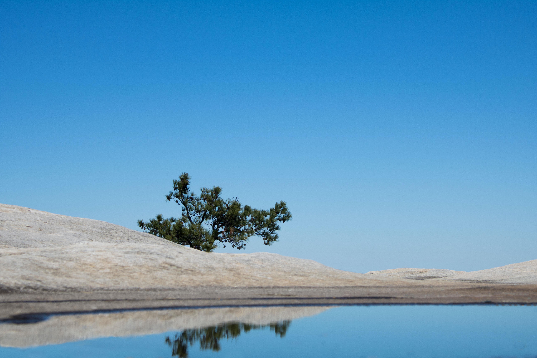 tree on beige soil near body of water