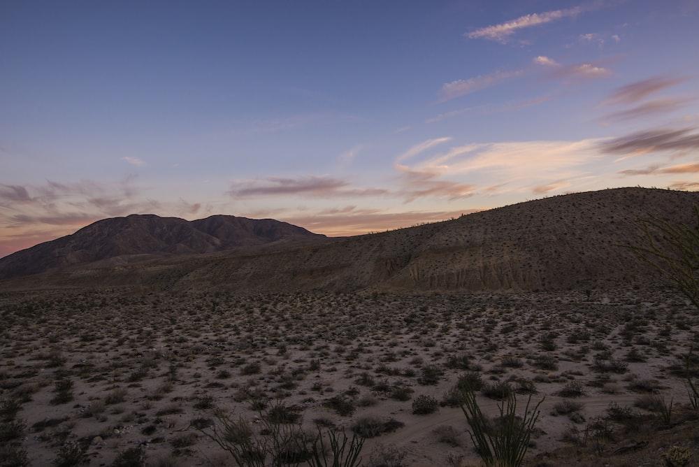 desert with green grasses