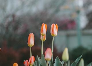 tilt-shift lens photo of orange flowers