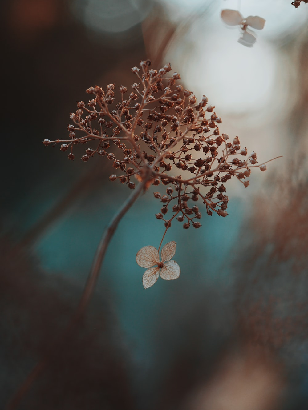 shallow focus photography of brown plant and white flower