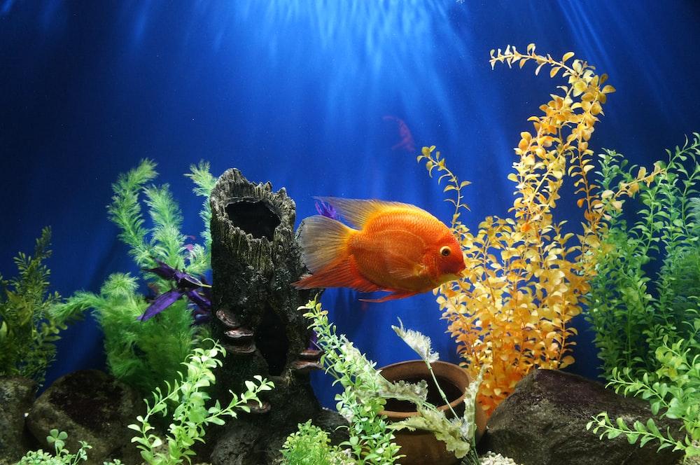 yellow fish swimming underwater