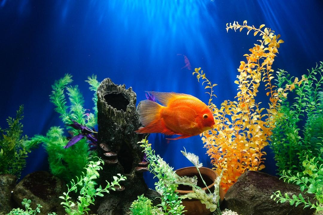 Best Aquarium Plants 21 Popular Plants For A Home Aquarium