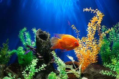 yellow fish swimming underwater aquarium teams background