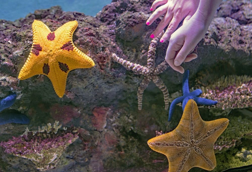 assorted-color star fish on rocks