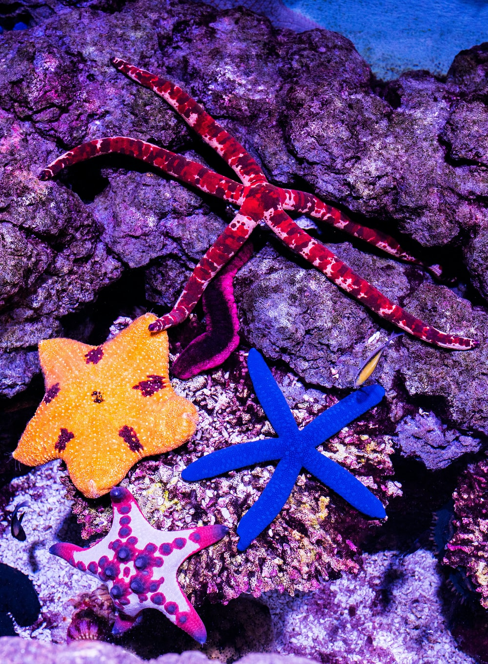shallow focus photo of blue starfish