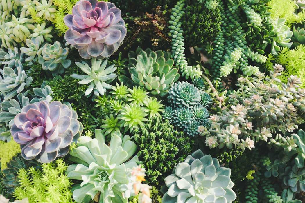 Succulent Garden | 40 Drought Tolerant Plant Ideas for your Homestead's Landscape